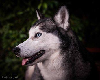 pet photographer ireland, pet photographer valencia, pet photographer galway, pet photographer spain