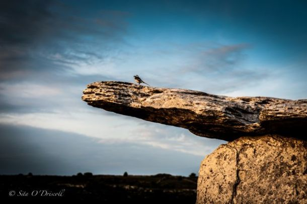 Poulnabrone, Burren, Co. Clare, Ireland, Landmarks, Ancient, Bird, Ireland, Photographer Sita O'Driscoll